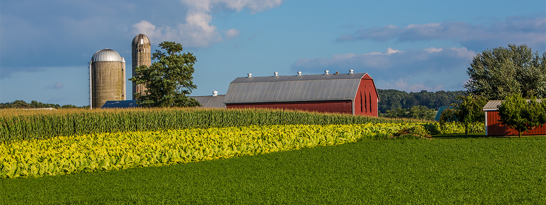 Albia Iowa Real Estate Country Homes Farms Land